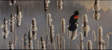 Marsh Notes - Redwinged Blackbird