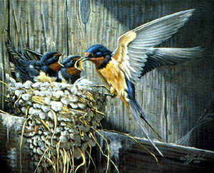 Country Living - Barn Swallows