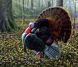 The King of Spring - Wild Turkey